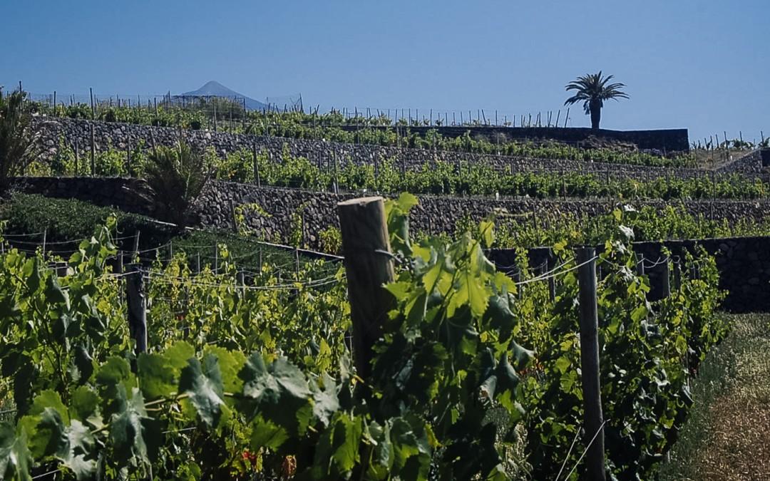 La tierra, elemento esencial para el buen vino