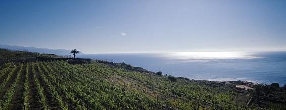 La Bodega El Sitio de San Juan, es la única que desde su origen se inscribió directamente en la DOP Islas Canarias.