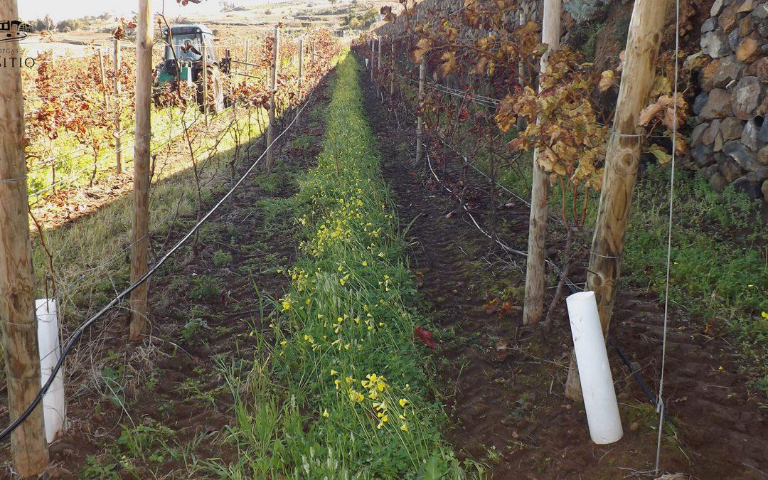 La Trevina entre los viñedos